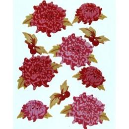 Boutons Chrysanthèmes